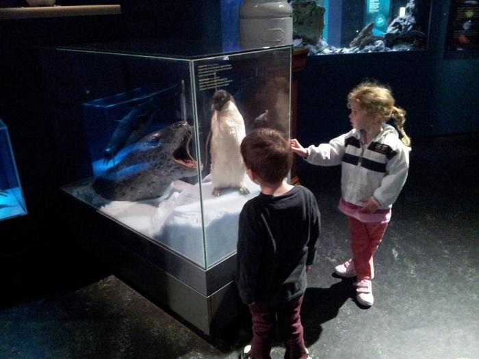 Australian Museum Penguin