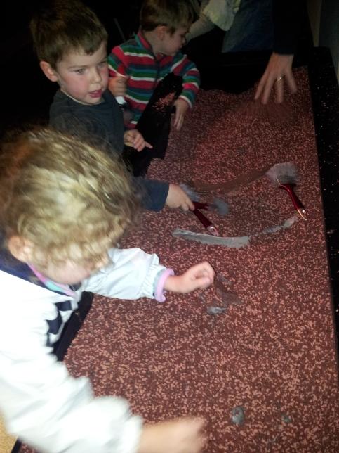 Australian Museum Palaeontologist