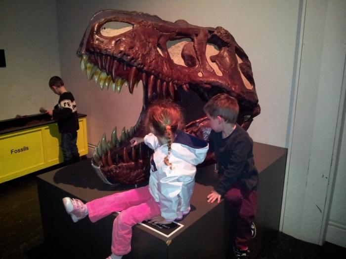 Australian Museum Dinosaur