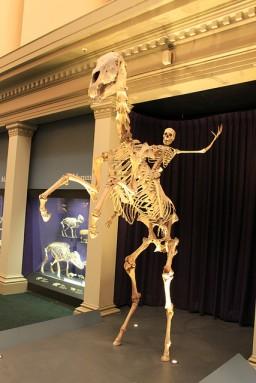 Australian Museum Skeleton