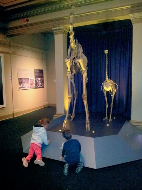 Australian Museum Skeleton Gallery