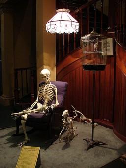 Australian Museum Skeletons